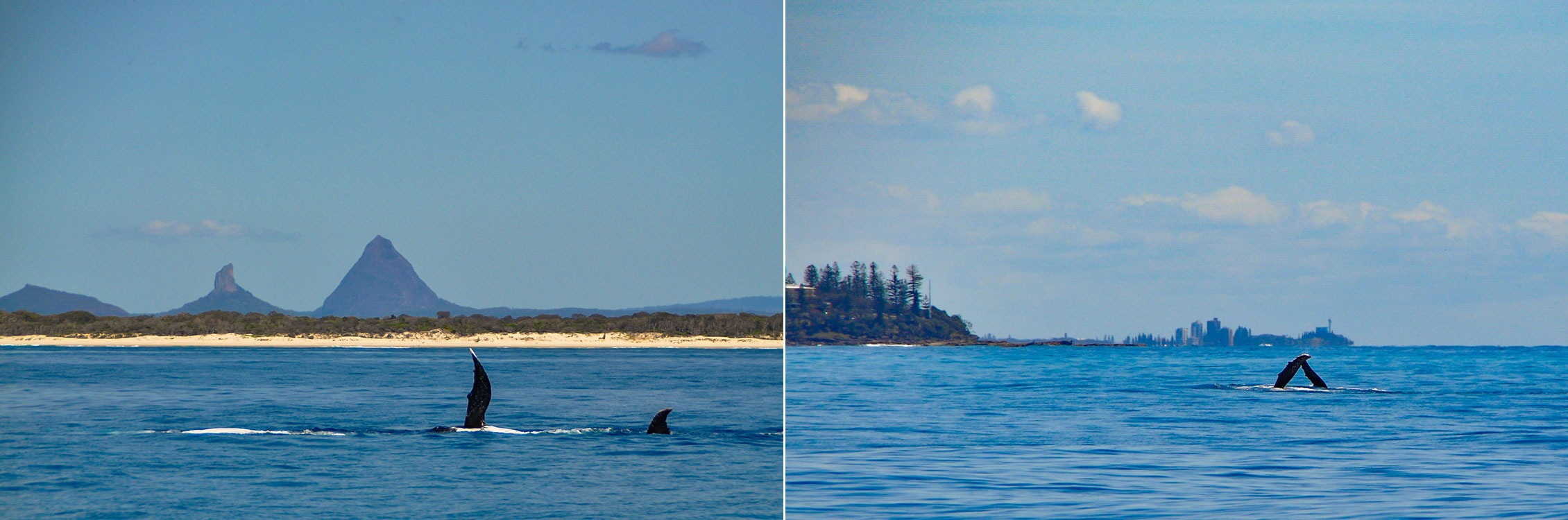 Left: Close encounters with whales. Right: A whale waves 'hello'.